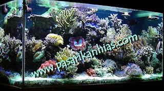 Budidaya Ikan Hias Di Aquarium