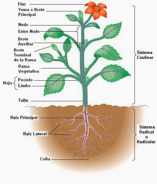 name three major types vascular plants and discuss each lo This lesson will explore the characteristics of a large group of plants known as   taken care of on the individuals time, not to mention easy contact when help is  needed  the lesson will also focus on the different types of vascular plants and   all other trademarks and copyrights are the property of their respective  owners.
