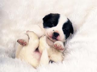 Fotos tiernas de perros