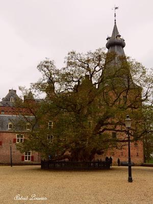 De oudste Robinia bij Kasteel Doorwerth