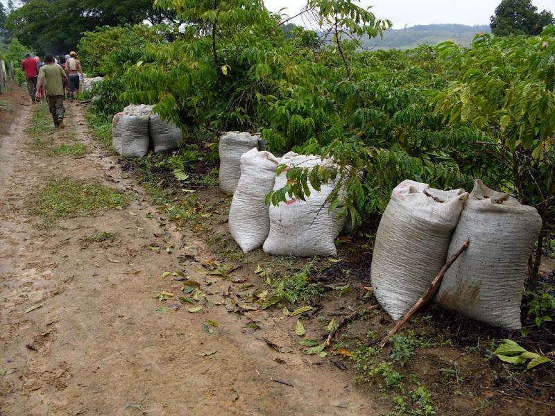 TST mantém condenação de fazenda de café que submetia trabalhadores a condições degradantes