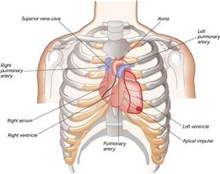 Manfaat Minum Air Panas Bagi jantung