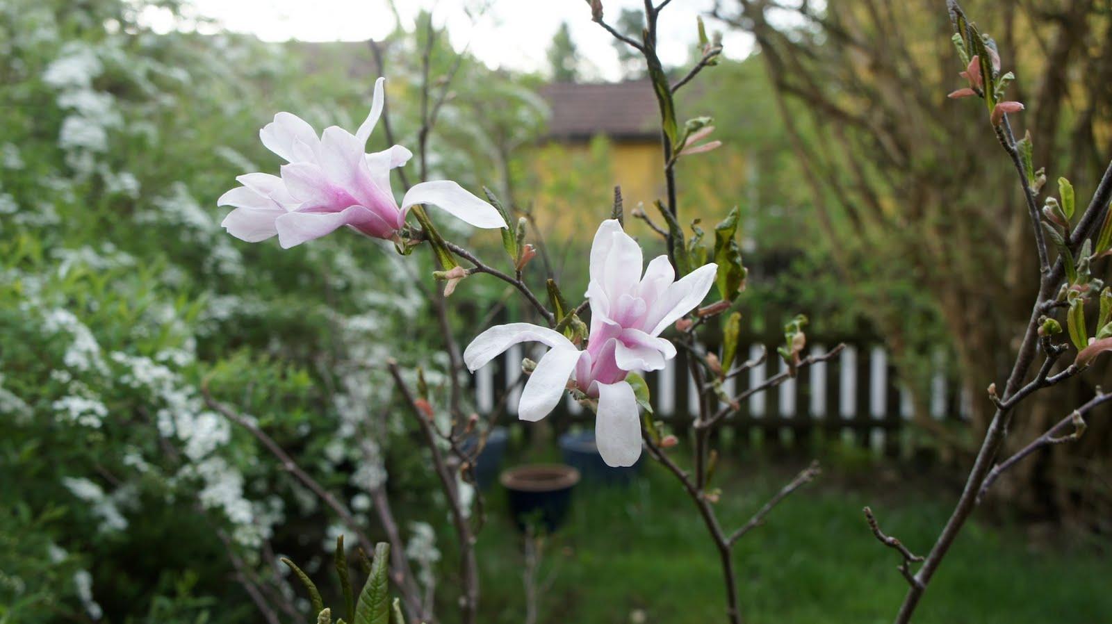 irinas blommor jordbro