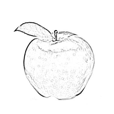 Apple fruit sketch