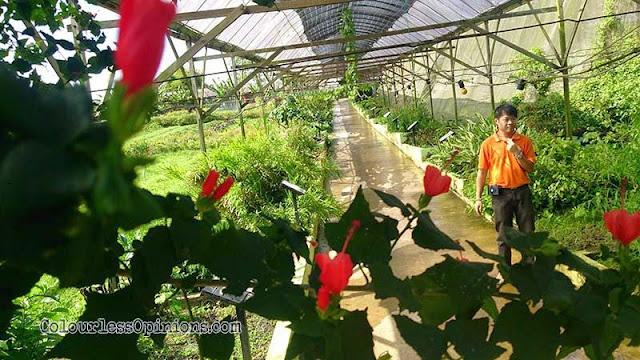 Zenxin Organic Farm tan wee leong