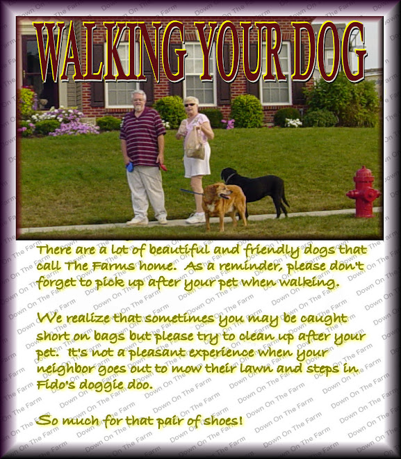 WALKING YOUR DOG 2011