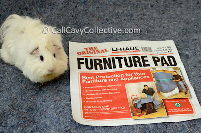 guinea pig alternative beddings review fleece and furniture pads