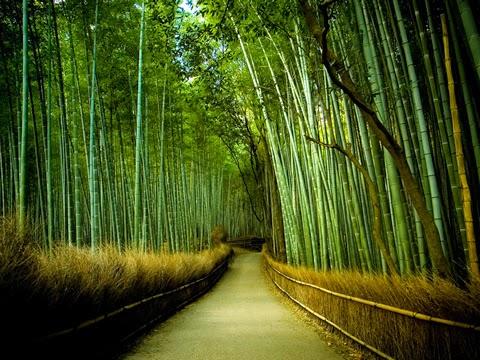bosque de bamboo