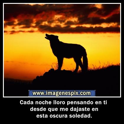 Imagenes con frases facebook | Imágenes de amor : Imágenes de lobo ...