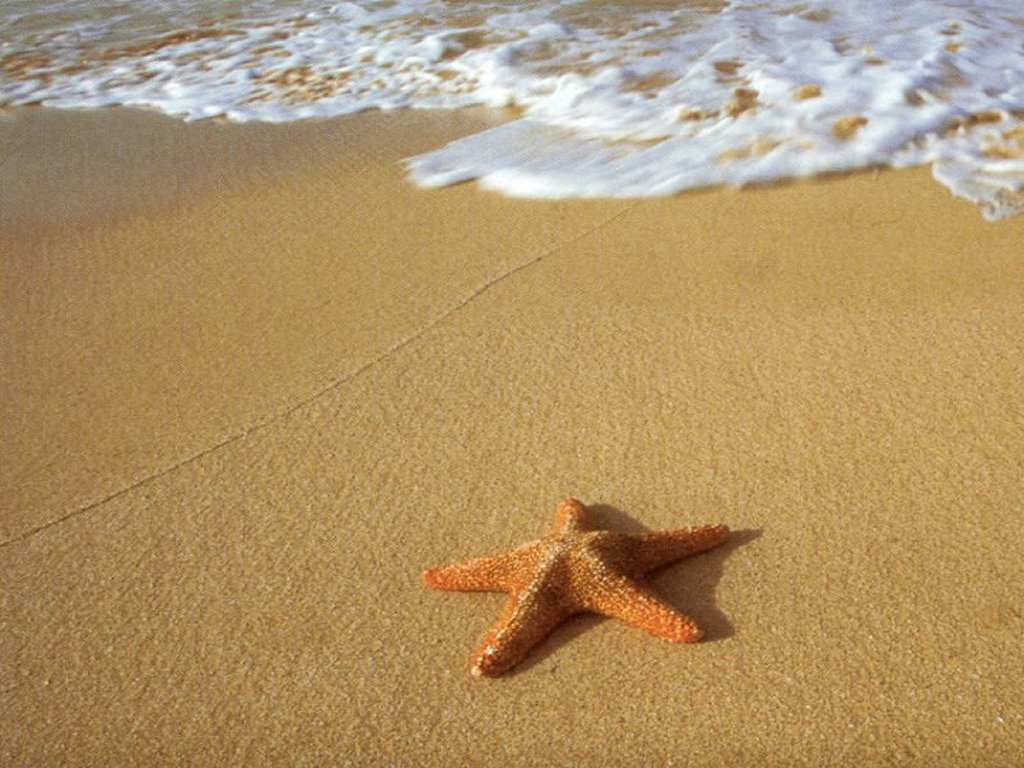 Interesting Facts About Starfish and Pictures | Animal ...