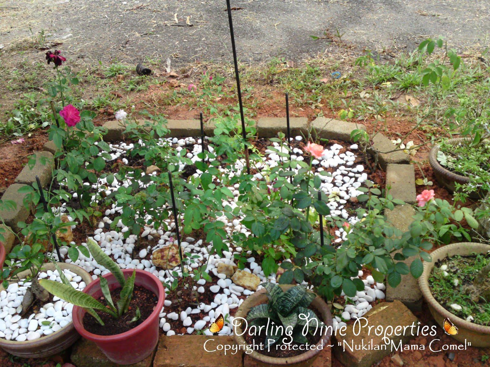 Taman Bunga Ros Suamiku. Wanginya Bunga Itu.... | Darling Ninie