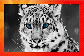 Leopardo en las nieves.
