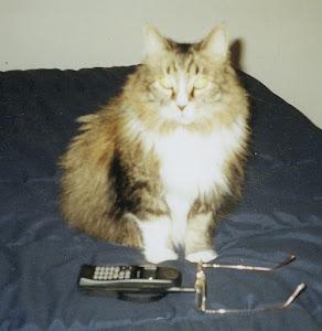 BUCKWHEAT 1989-2009
