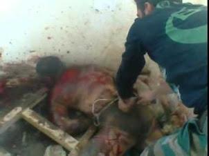 ريف القصير , قاسي جداً , تعذيب بربري من قبل الشبيحة الارهابيين النصيريين العلوين لأحد المواطنيين