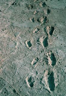 Estas huellas tienen 3.6 millones de años
