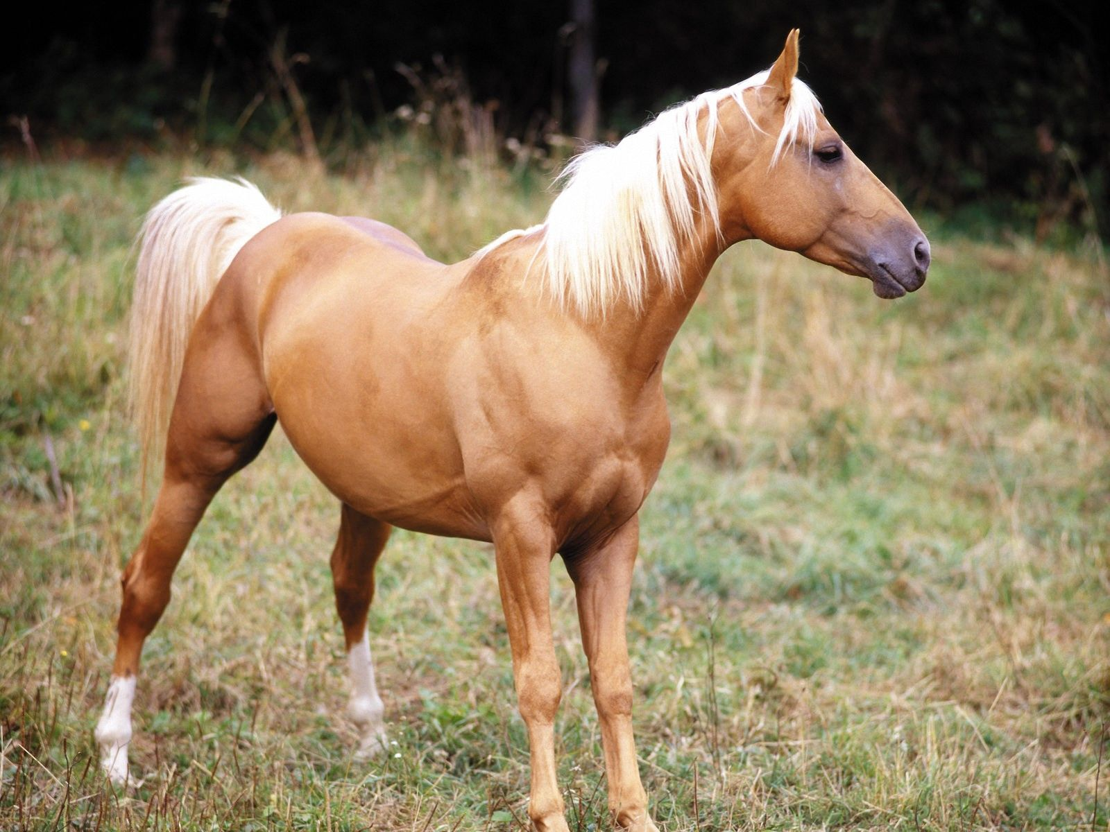 Animal Wallpapers Blog: Horse Wallpapers