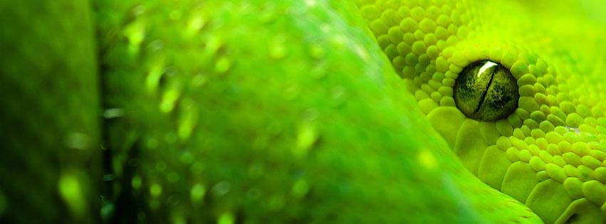 Обложка facebook зелёная змея