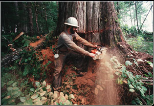 Leanna's Bio blog: Deforestation - Effects on the diversity of ...