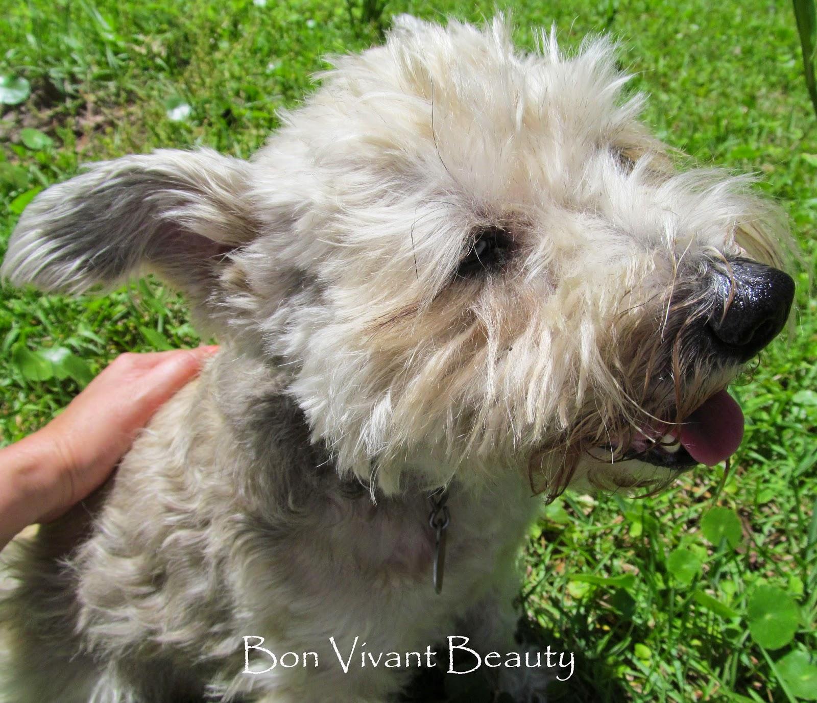 Bon Vivant Beauty: NOTD: Julep's Hartleigh #477119