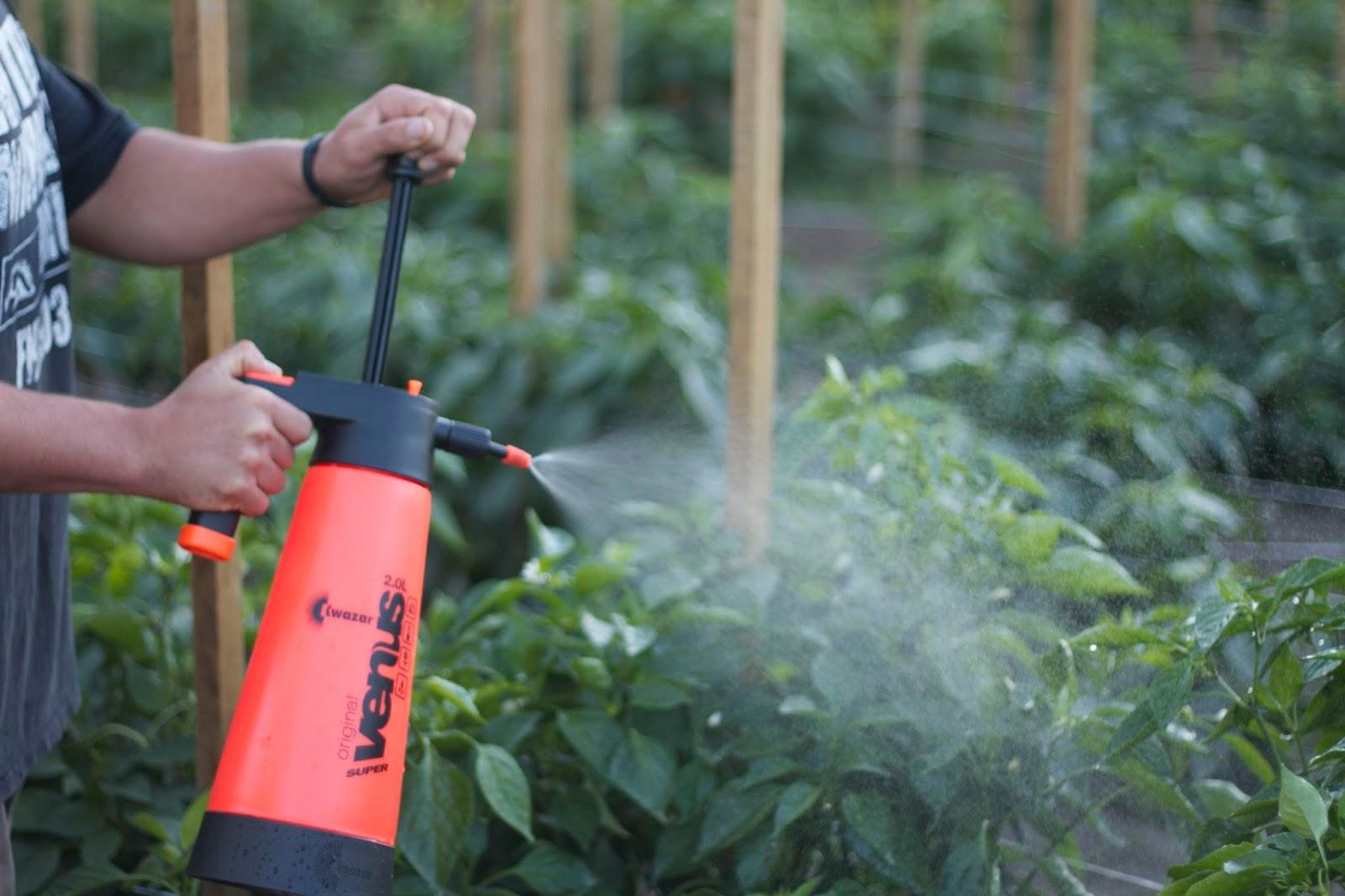 Как сделать мыльный раствор для опрыскивания растений
