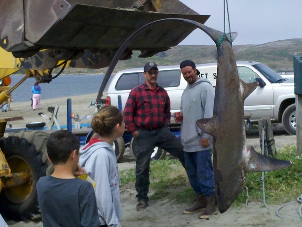 Lawson 39 s landing fishing report june 2011 for Tomales bay fishing report