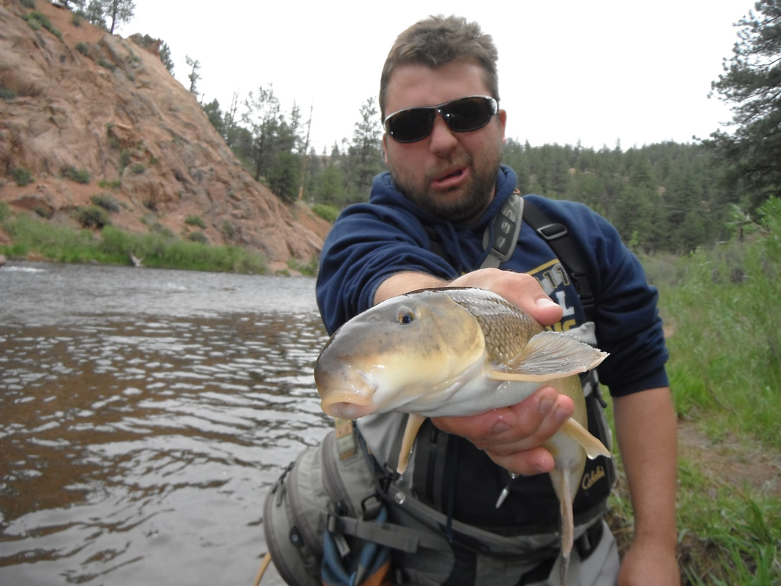 Tie and fly colorado deckers carp fishing for Fly fishing in colorado