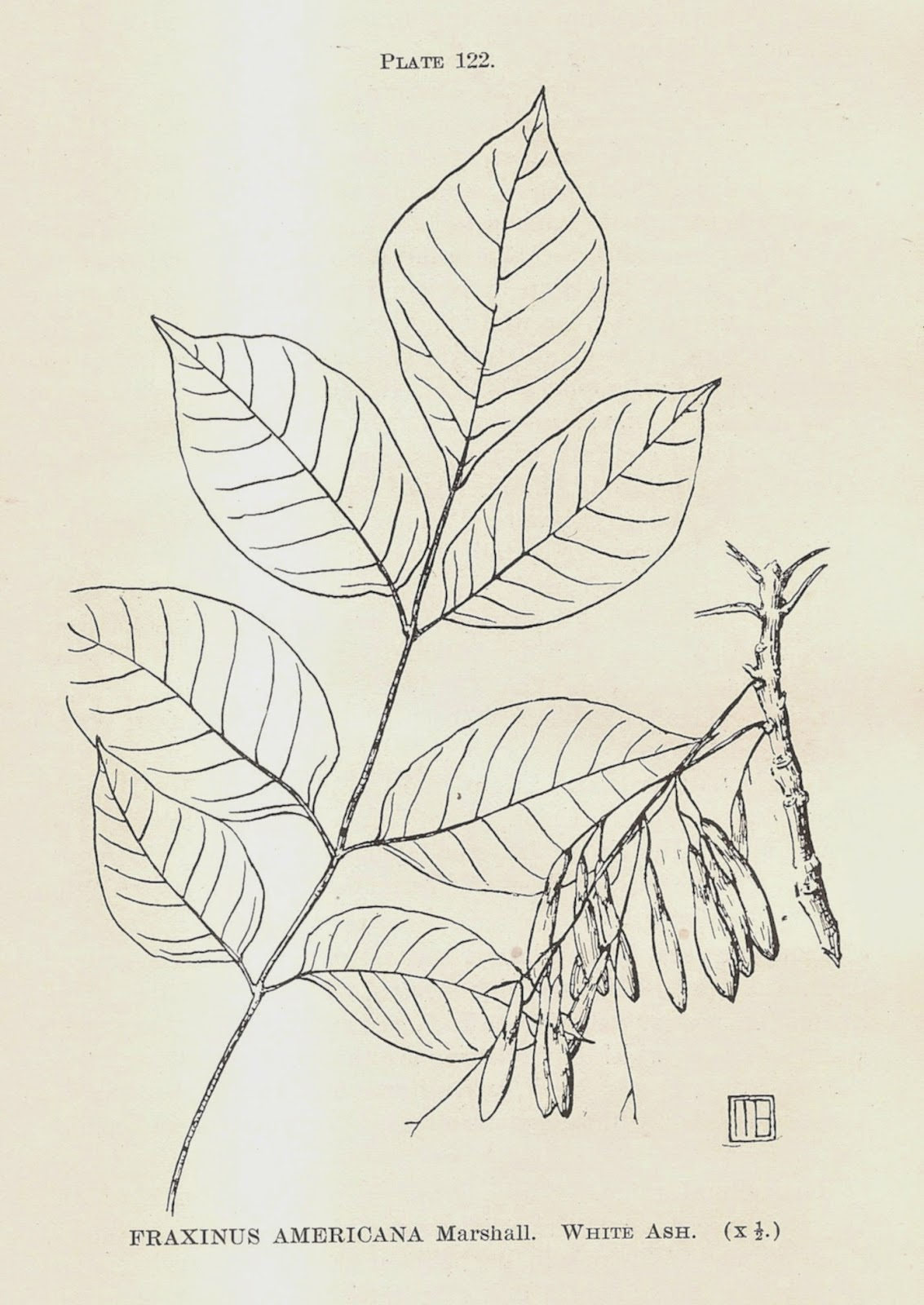 emerald ash borer indiana