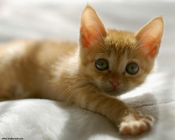 Photo bébé chat avec beau yeux