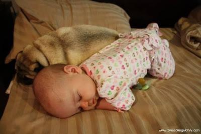 funny_picture_wow_vandanasanju.blogspot.com
