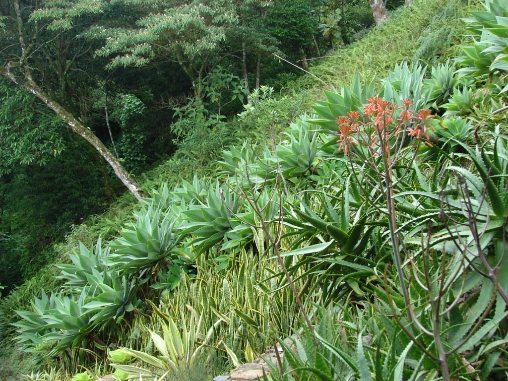 bordes de jardines para hojas
