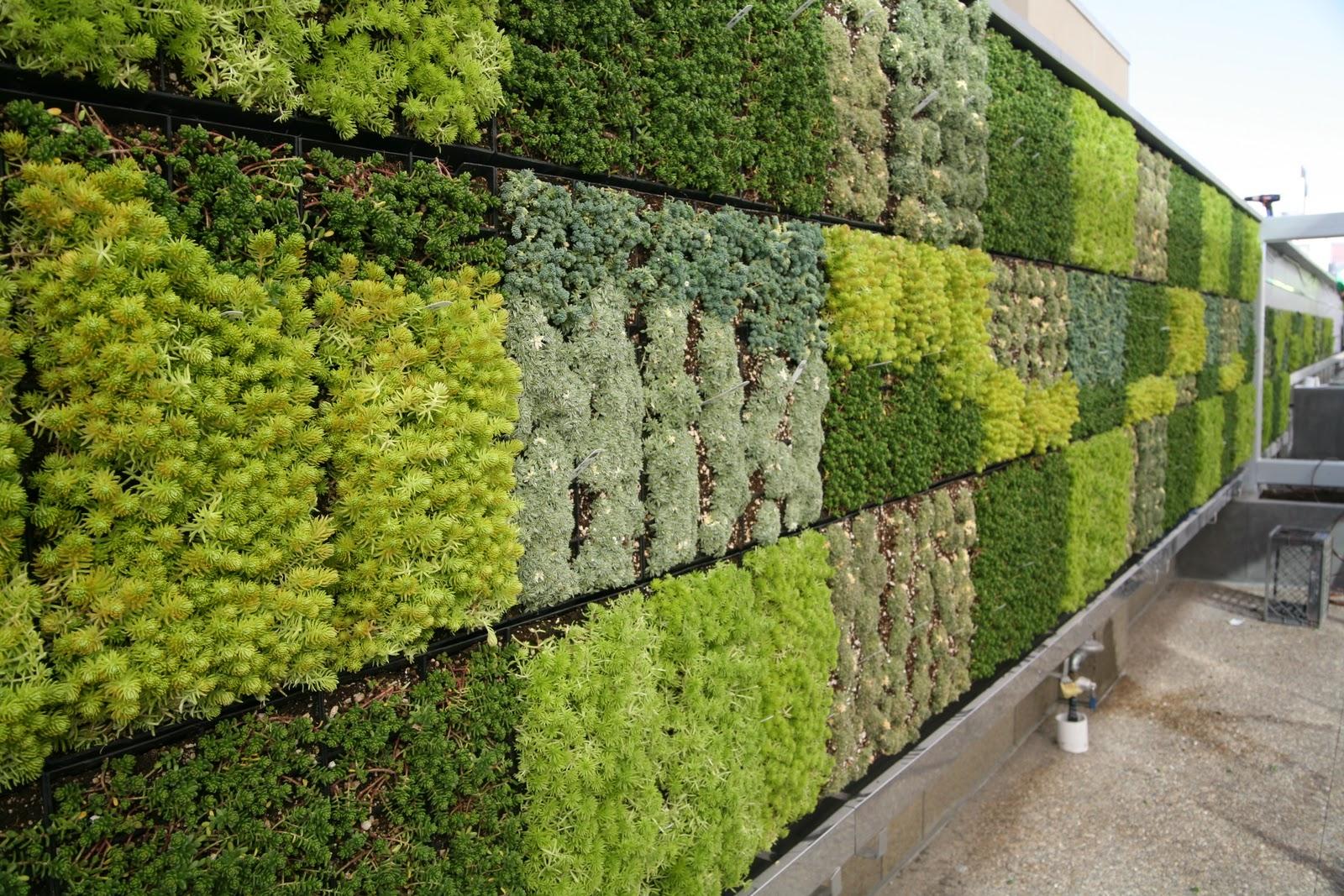 Quadros e jardins verticais de suculentas paisagismo legal for Tela para muro verde