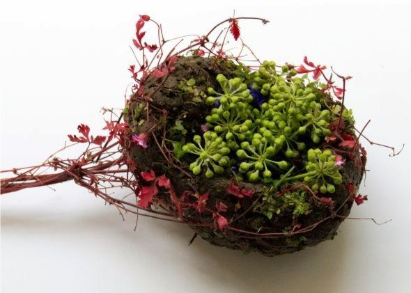Camila Sitarama Carlow arranjos plantas flores órgãos humanos Baço
