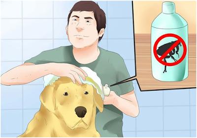 Hạn chế của phương pháp này là bạn phải tắm thường xuyên