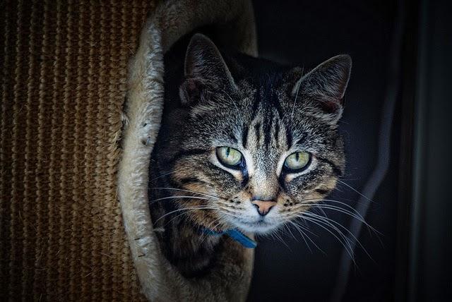 La curiosidad mato al gato, dopamina y adicción en el marketing