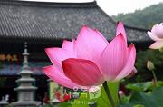 Seoul Lotus Flower Culture Festival