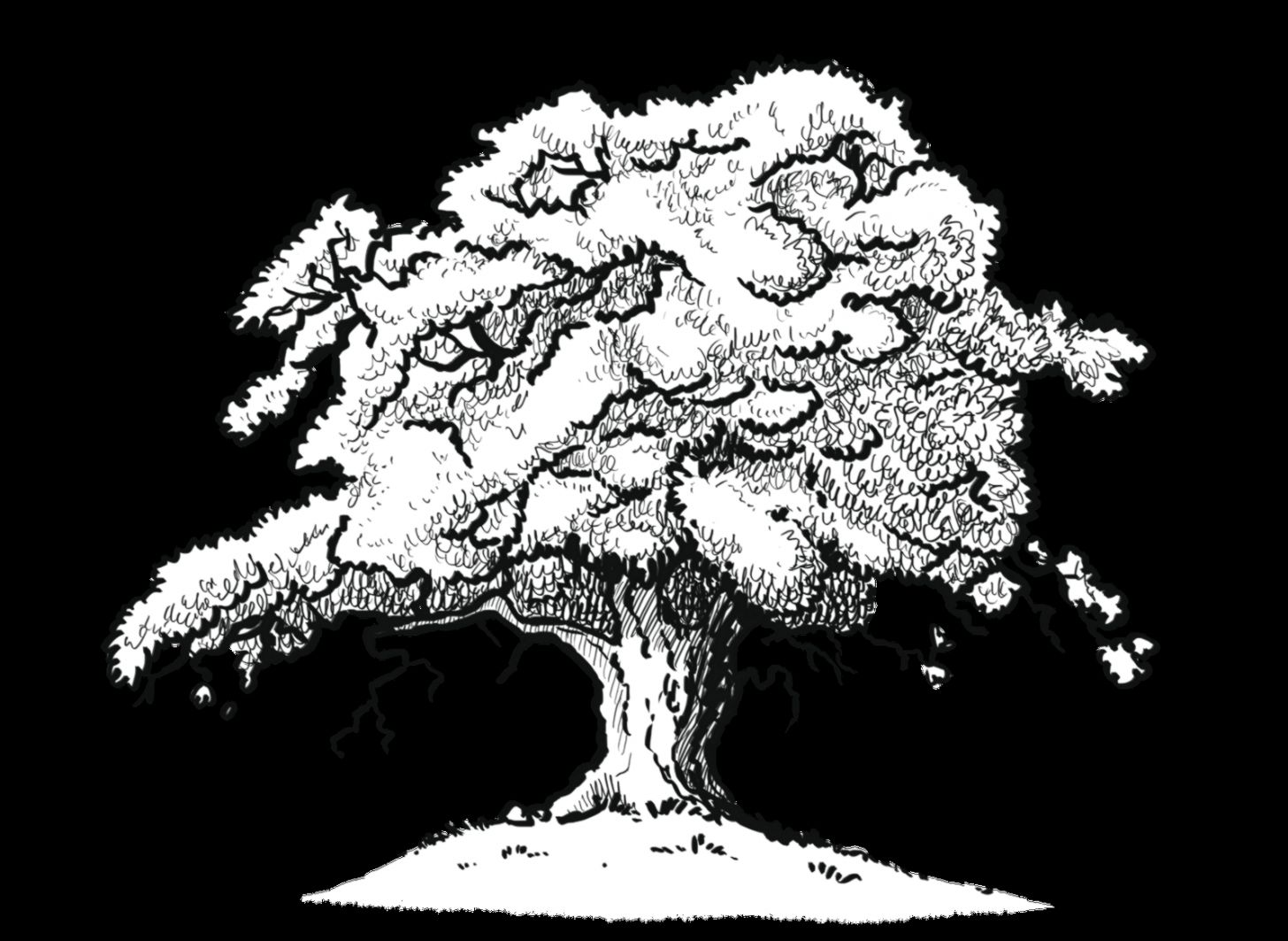 Simple Oak Tree Drawing  Images  galleries