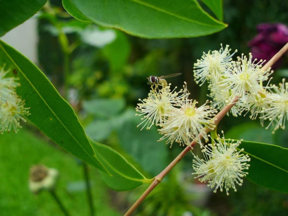 Vivero de plantas bonaerenses for Vivero plantas nativas
