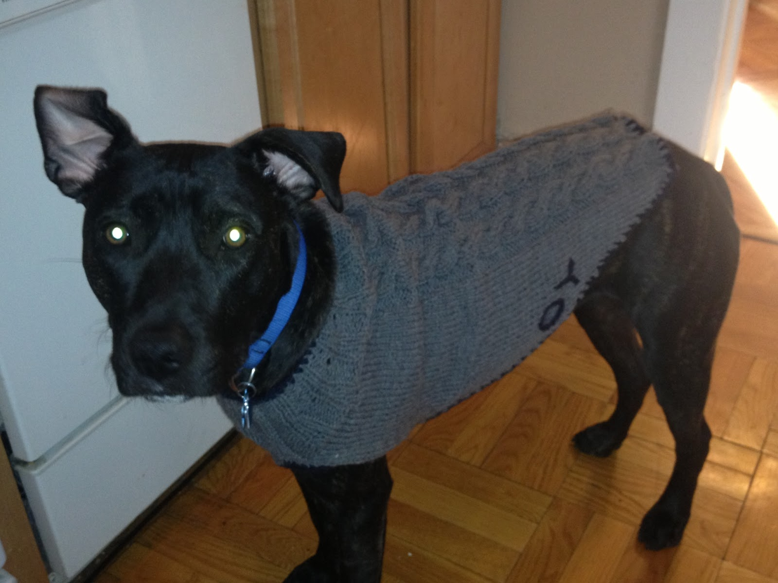 Charm Hour: A very pit bull sweater