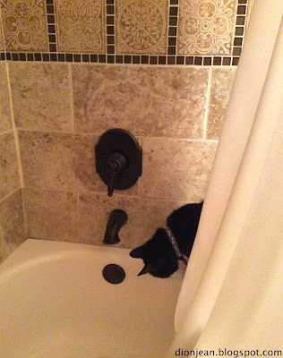 Black cat Troy looking for bath water