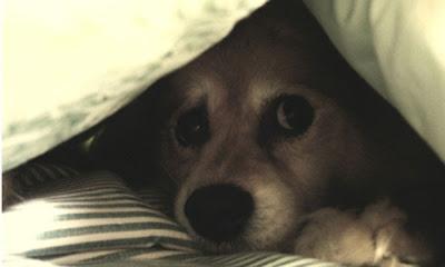 perro bajo cama