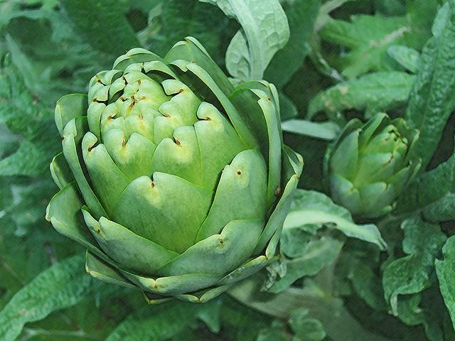 朝鮮薊吃起來爽口又回甘,而且是非常好的機能保健食物歐!
