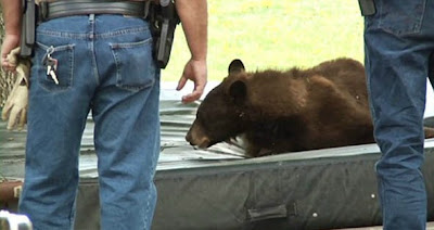 beruang iseng