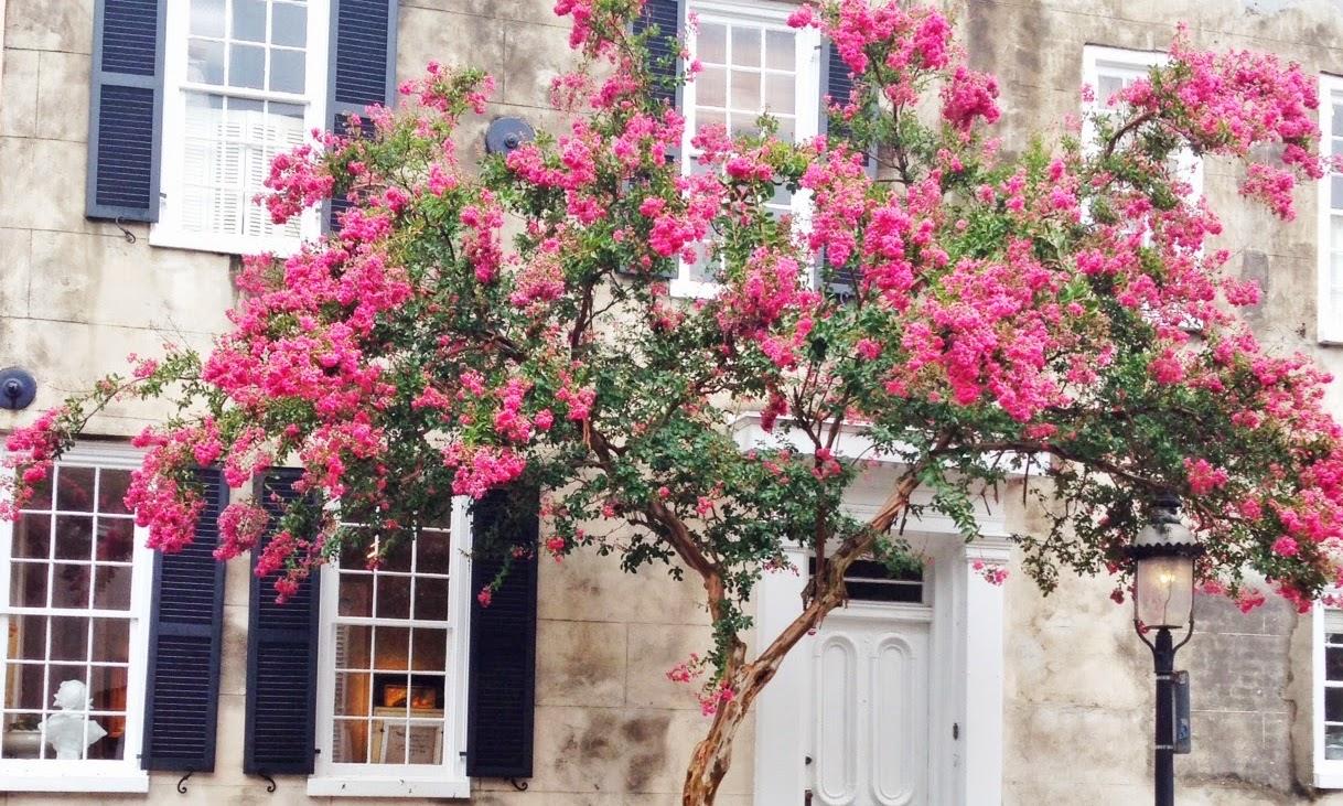 Not So Charming Charleston
