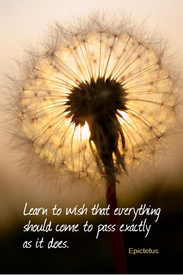 visual quote - image quotation for Acceptance - Learn to wish that everything should come to pass exactly as it does. - Epictetus