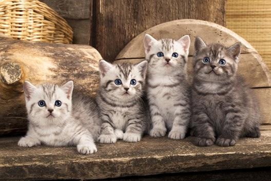 Ile kotów to za dużo kotów?