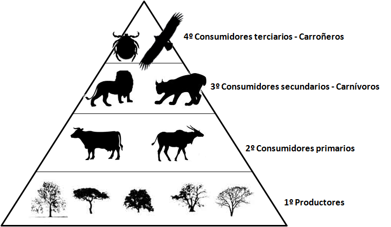 La piramide trofica - Imagui