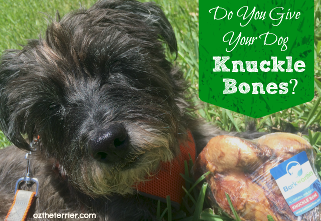 Oz the Terrier asks pet parents Do You Give Your Dog Knuckle Bones as a chew treat?