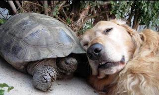 tortuga y perro, una pareja de lo más peculiar