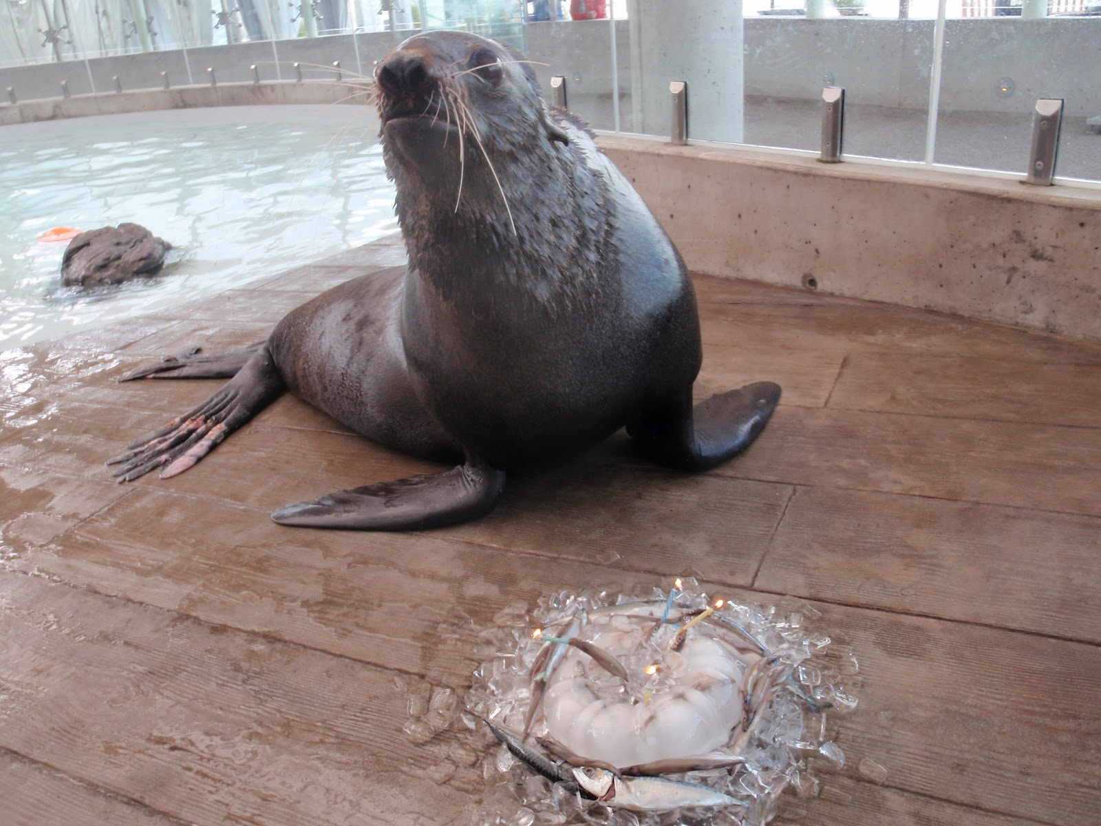 marine mammal trainer The #1 resource for aspiring marine animal care professionals created by kyle kittleson.