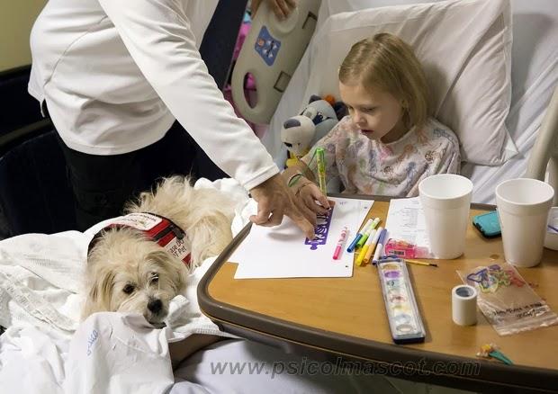 Sntomas de una perra embarazada - ExpertoAnimal